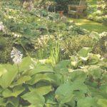 jardins-de-sombra3