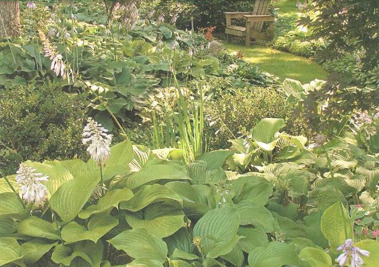 plantas jardim sombra:jardins-de-sombra3