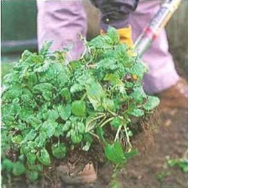 somar-e-dividir-plantas-1