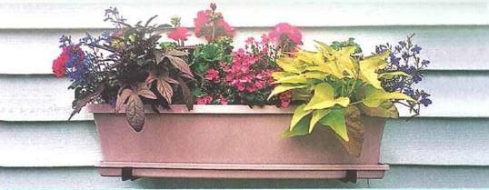 plantas-em-vasos-de-pendurar