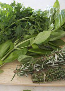 ervas aromáticas1
