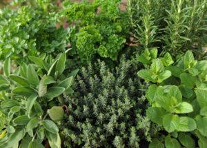 ervas aromáticas3