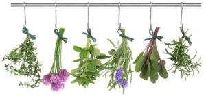 ervas aromáticas4