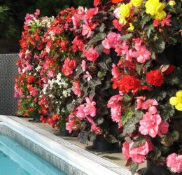 Tipos de flores para jardim vertical - Fa?a Voc? Mesmo