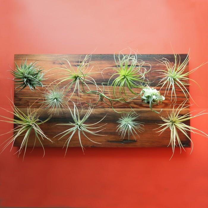os melhores tipos de plantas para jardim vertical  Faça Você Mesmo