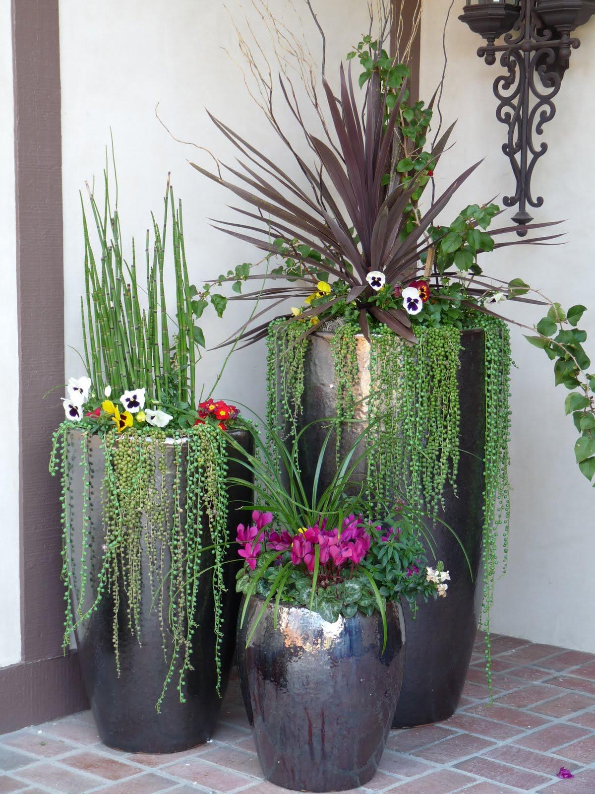 Plantas em vaso a localização ideal Faça Você Mesmo
